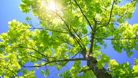 Complete Tree Care, Pruning & Removal